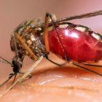 धादिङमा डेंगु र स्क्रबटाइफसबाट ५७ जना संक्रमित